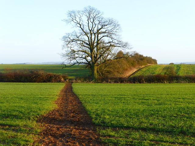 Farmland with footpath, Wing