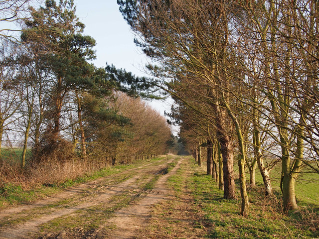 Avenue to Trimley Lower Street