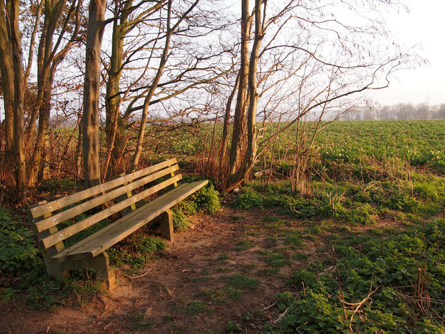 Bench on Finger Bread Hill