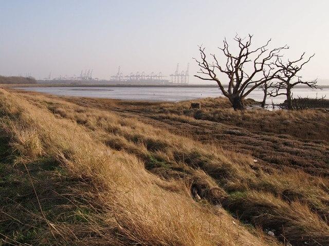 Dead Trees by Sea Breach