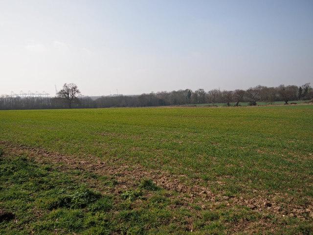 Farmland and shelterbelt