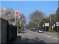 TQ4076 : Stratheden Road on a spring day by Stephen Craven
