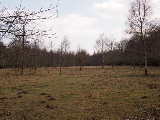 Clearing, SWT Captain's Wood