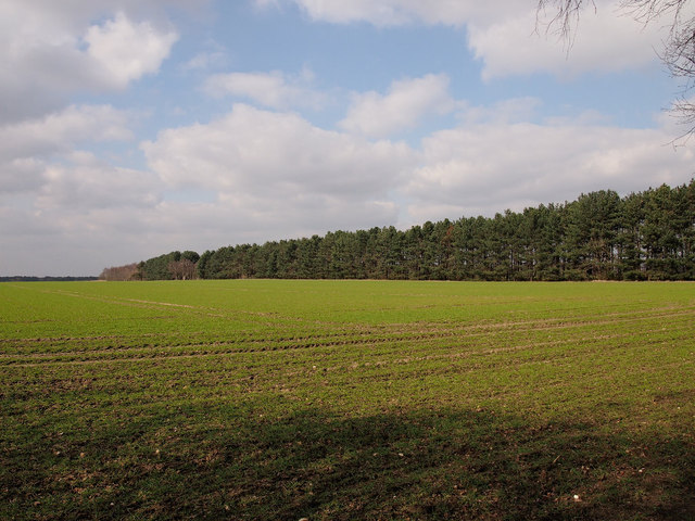 Sudbourne Great Wood