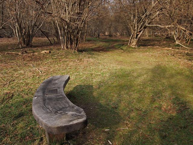Seat in Hazel Coppice