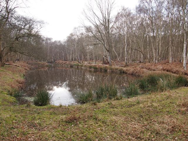 Pond, Captain's Wood