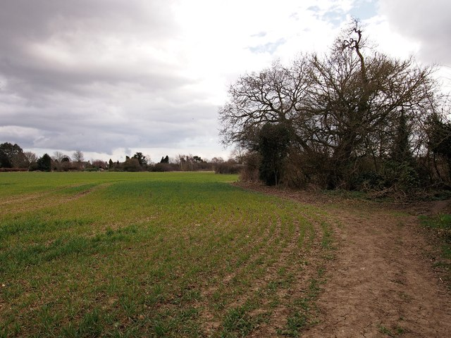 Field, Ipswich Northern Fringe, looking back to Valley Road