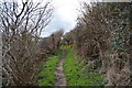 SH5283 : Anglesey Coast Path by N Chadwick