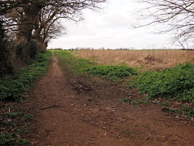 Footpath by field