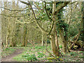 SU9793 : Hodgemoor Woods by Robin Webster