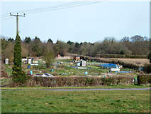 SU9395 : Allotments, Winchmore Hill by Robin Webster