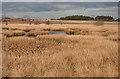 NS8073 : Wetland by Anne Burgess