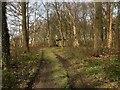 SJ9081 : Path in Gibson Wood, Adlington Estate by David Dixon