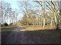 SP1098 : Junction of paths, northeast of Bracebridge Pool, Sutton Park by Robin Stott