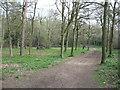 SU9187 : In Farm Wood by David Purchase