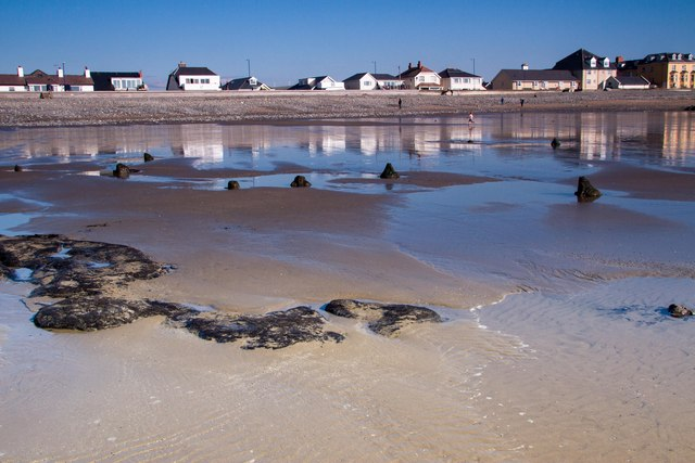The beginnings of the sunken forest, Borth