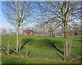 SP7615 : Tree Shadows, Coney Hill Farm by Des Blenkinsopp