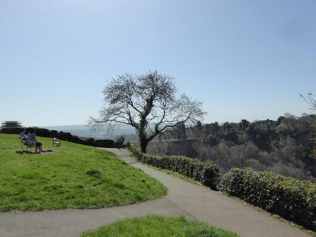 Tree over Avon Gorge