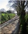 SX2383 : Lane to Tregunnon by Derek Harper