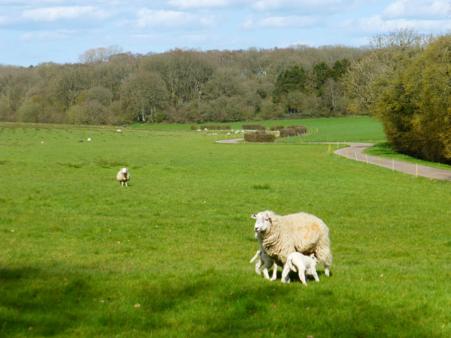 Pasture, Newtown, Shalbourne