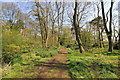 SJ6781 : The Woodland Walk at Arley Hall by Jeff Buck