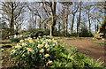 SJ6781 : The Woodland Walk at Arley Hall by Jeff Buck