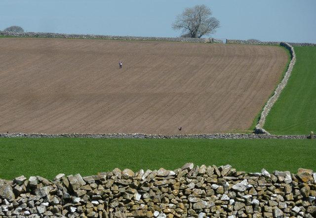 Walker on a footpath near Tideswell
