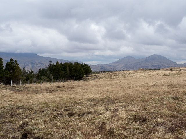 Moorland adjacent to coniferous plantation
