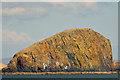 NG3679 : Cliffs on Gaeilavore Island : Week 16