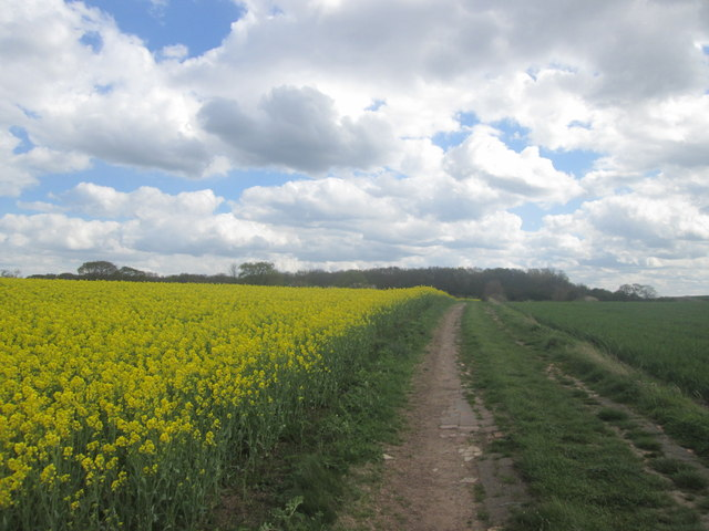 Track towards Belgraves Wood