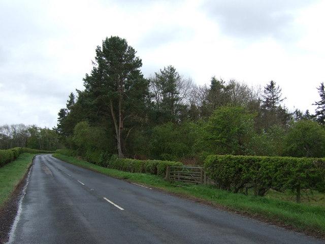 Woodland beside the B6525