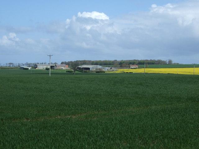 Crop field towards Kentstone
