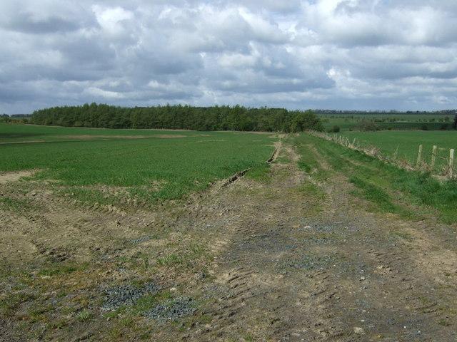 Farm track towards woodland