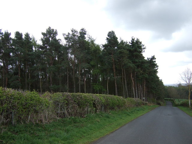 Woodland, The Glen