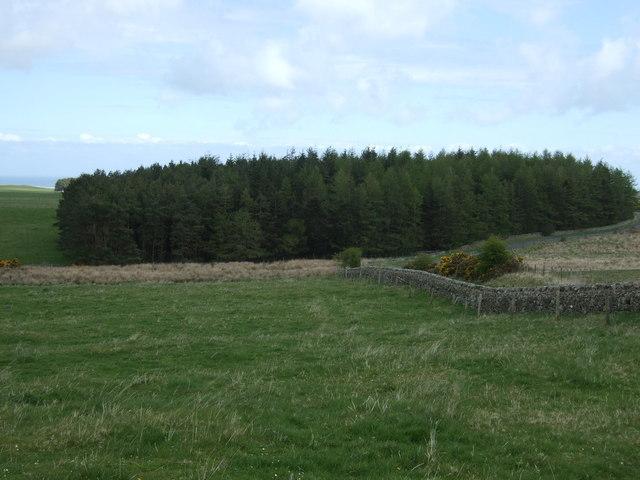 Woodland, Belford Moor
