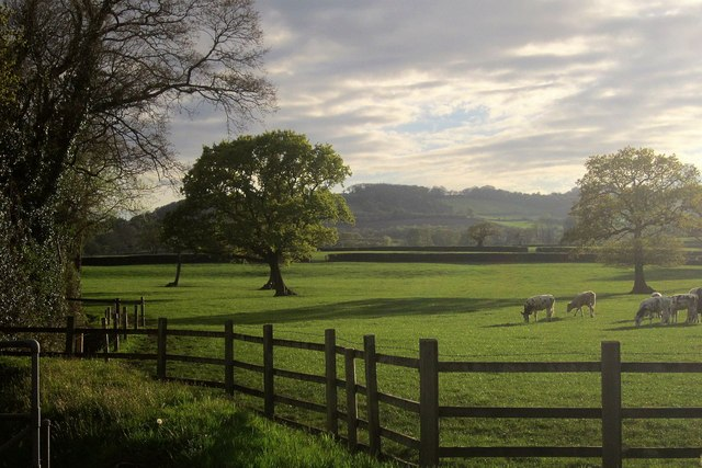 Cattle pasture by Monks Way