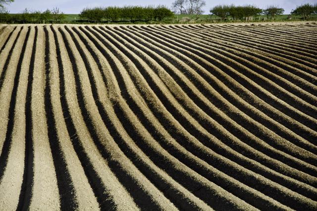 Field by Fimber roundabout, E Yorks