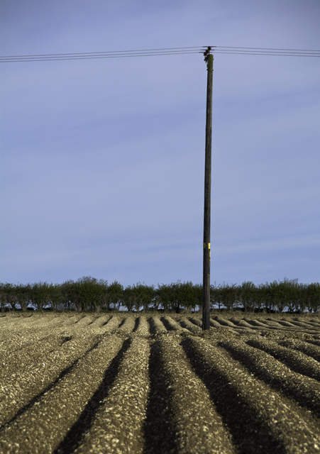 Power line and potatoes, near Fimber, E Yorks