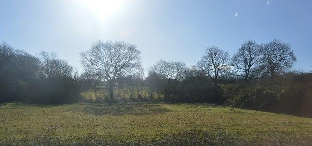 Near the corner of King's Wood