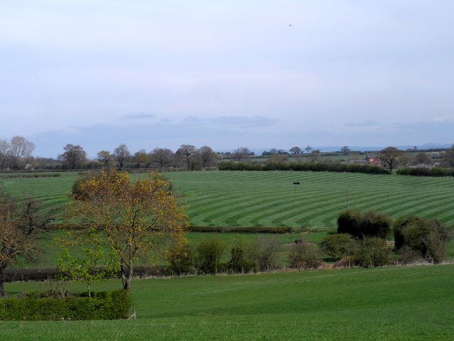 Stripes in the fields