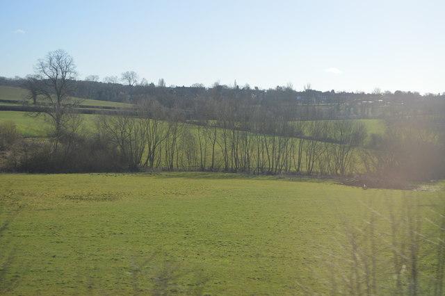 Trees along Bourne Brook