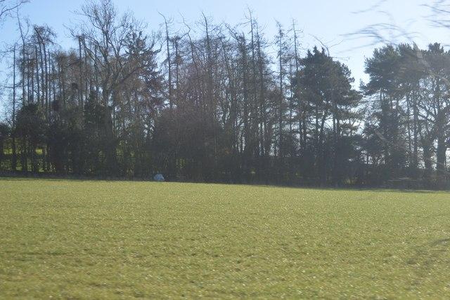 Woodland near Spring Hill