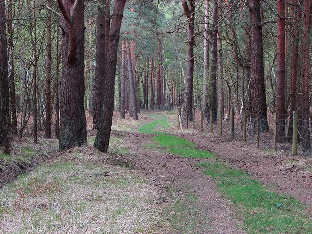 Woodland path, Ash Ranges