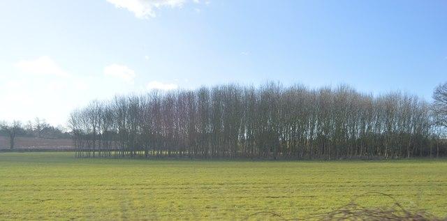 Woodland near Daw Mill Colliery