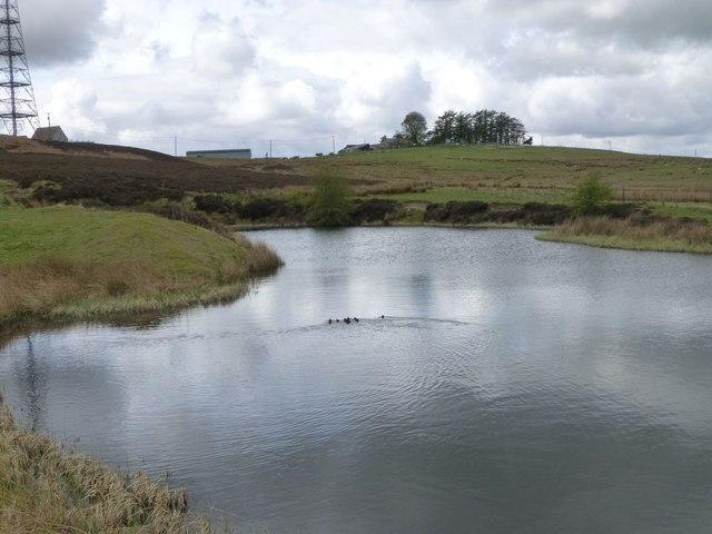 Pond below Cuddy's Knowe