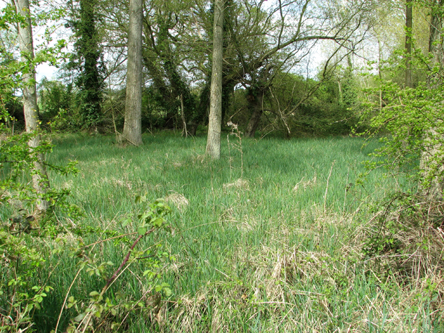 Swampy ground beside the footpath
