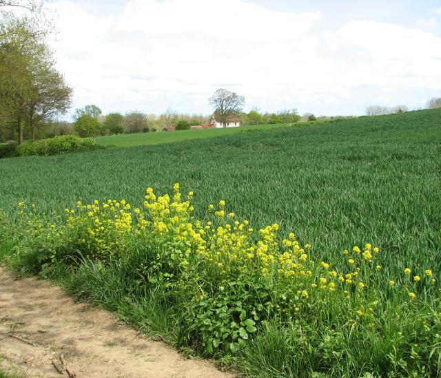 Fields by Burton's Farm