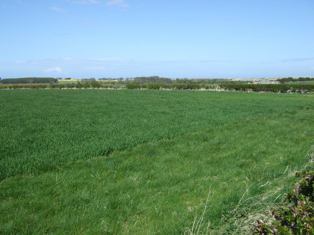 Crop field near Tughall Mill