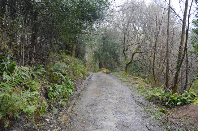 Footpath in West Wood
