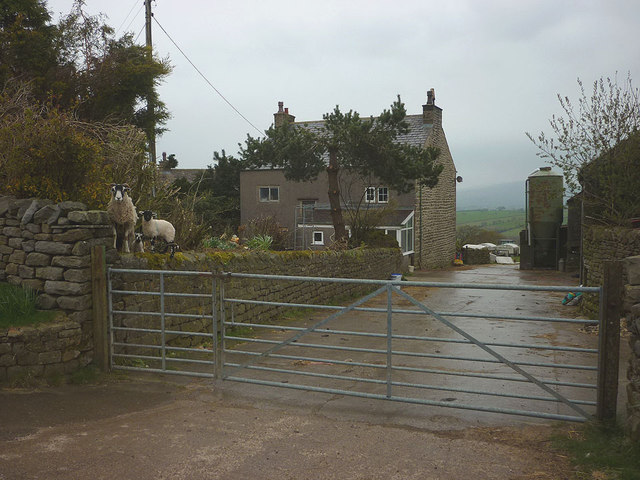 Sheep on guard at Over Houses